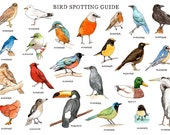 Bird Spotting Guide - Murderers and Rapists - Limited Edition Giclee Print