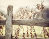 Rustic Decor, Golden Country Landscape, Fence Photograph, Art for Living Room, Yellow Photography, Yellow Wall Art, Farmhouse Fence Picture.