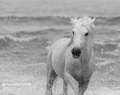Sea Horse Turning II - Fine Art Horse Photograph - Horse - Ocean - Camargue