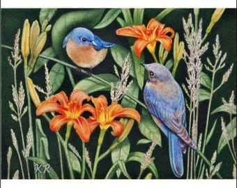The Bluebirds ACEO art print male female birds orange flowers miniature by Karen Romine KR free shipping nature limited edition signed