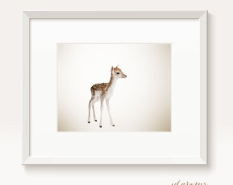 Baby Animal Wall Art Print - for all ages - Fine art photograhic poster - Forest animal - Baby deer - Fawn #3