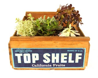 "Vintage ""Top Shelf"" Fruit Crate (c1950s) - Industrial Storage Crate, Plant Holder, Party Tray"
