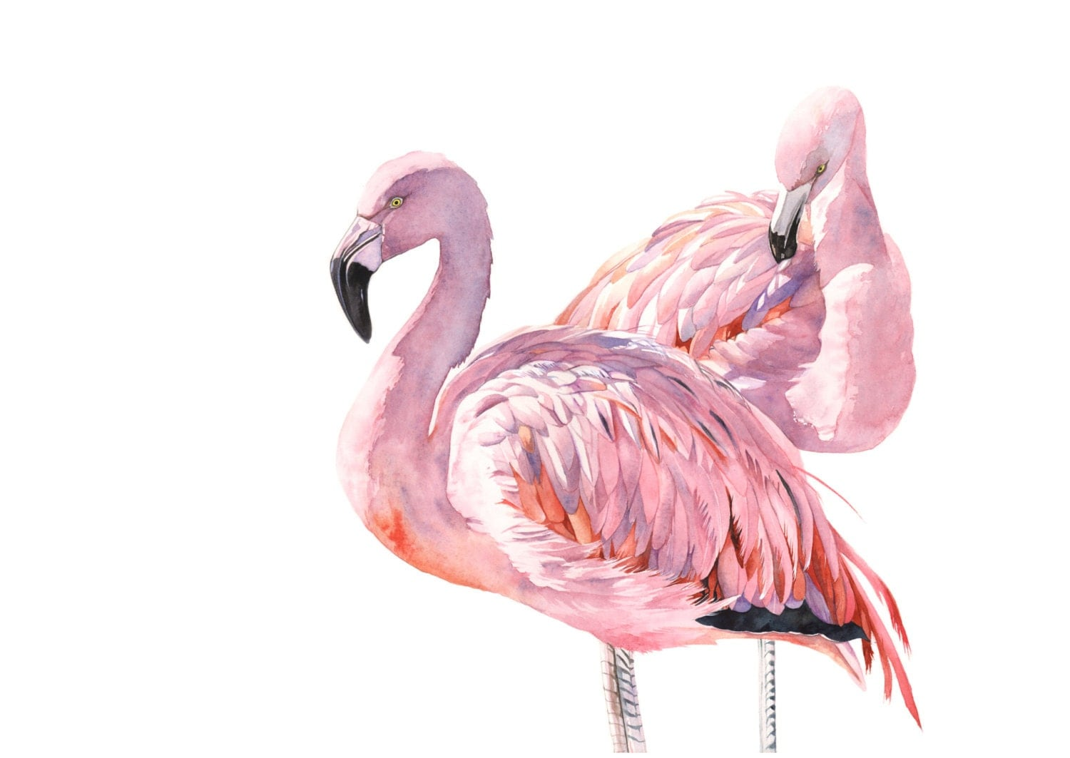 Flamingo Print of watercolour painting 5 by 7 size by ...