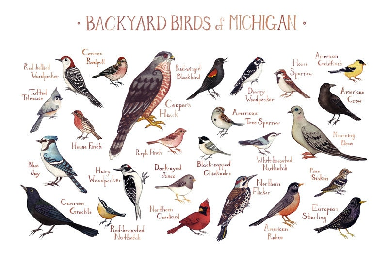 Michigan Backyard Birds Field Guide Art Print / Watercolor