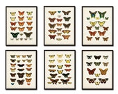 Vintage Butterfly Print Set 1 - Art Print - Giclee Canvas Print - Nature Prints - Posters - Natural History Art- Multiple Sizes Available