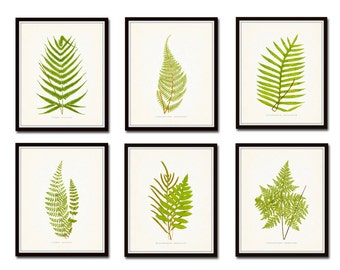 Vintage Ferns Print Set No. 1, Botanical Prints, Giclee, Art Print, Antique Botanical Prints, Wall Art, Fern Prints, Woodland, Leaf Prints