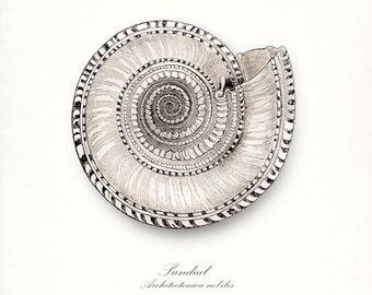 Coastal Decor Vintage Sundial Sea Shell Giclee Print