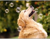 Pack of 4 Dog Puppy Golden Retriever Bubbles dogs puppies Greeting Notecards/ Envelopes Set