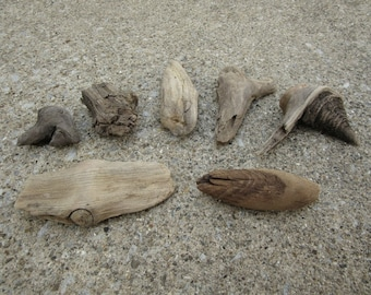 Lot of 7 Knotted Driftwood Pieces Lake Michigan Craft Supplies