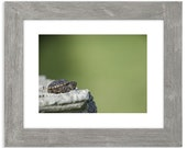 Tiny Turtle Matted Print
