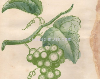 Flower Of Consolation-Hope-Cherish This Flower-Adversity-Victorian Poem-Green Grapes-1847 Antique Vintage Art Print-Goth Picture-Engraving