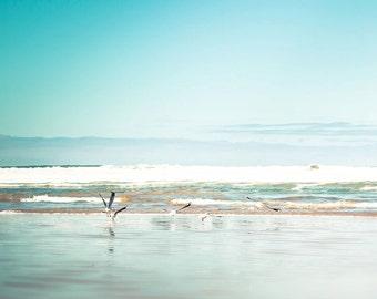nautical decor beach photography ocean birds photography seagulls 8x10 24x36 fine art photography waves birds flying photography aqua cream