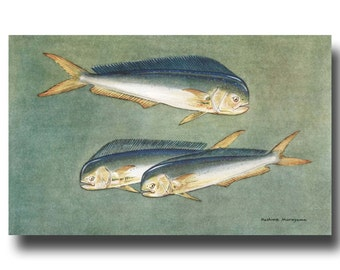 """Tropical Fish Art, Antique Fish Print, 1930s Ocean Home Decor --- """"Mahi Mahi Dolphin Fish"""" No. 200"""