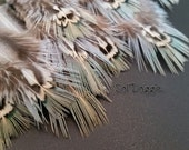 Small Feathers Craft Supplies Pheasant Feathers Blue Green Feathers Jewelry Supplies Craft Feathers