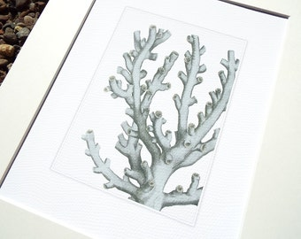 Sea Foam Blue Coral Branch 2 Sea Life Archival Print