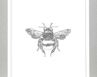 Bumble bee - Pencil Sketch - Print