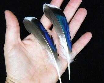 "Multipack 4""-6"" Duck feathers iridescent blue green mallard plumes natural FTHR01"
