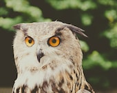 Irish Owl Fine Art Photog...