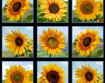 Sunflowers Flowers Cotton Quilting Fabric Panel Elizabeth's Studio 486