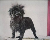 MONKEY TERRIER Affenpinscher DOG Vintage Mounted 1958  dog plate print Unique Birthday gift Congratulations Thank you terrier print