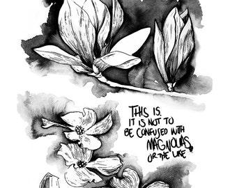 Magnolias Aren't Dogwoods