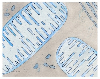 Mitochondria, science, science art, cell, biology art, sciart, geekery, science gift, art print, science print, watercolor, watercolor print