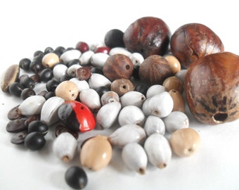 Seed Bead Lot, Varied Natural Seed Beads with Holes