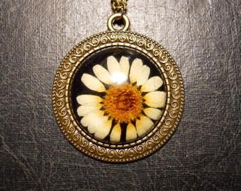 Daisy Flower on Black Preserved Specimen Necklace