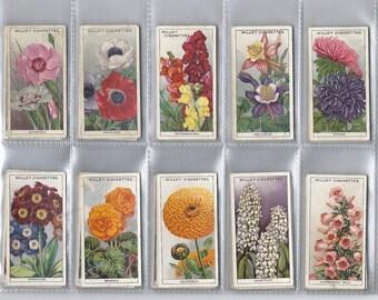 Garden Flower Card Set, 1933, for WD & HO Wills