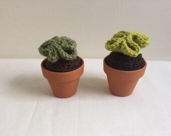 Amigurumi succulents, amigurumi cacti, cactus, cacti, fake plant, fake cacti, crochet cactus, succulent, crochet succulents, kawaii, decor