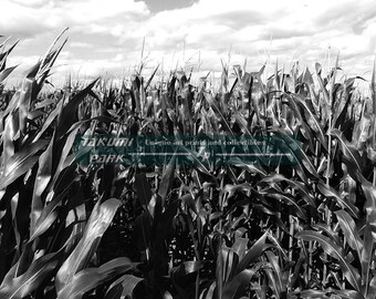 Corn Field Photograph, Black And White Photographic Print, Rural Art, Country Photo Print, Midwest Art, Home Decor, Living Room Decor