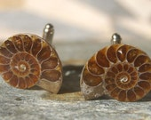 Ammonite Cufflinks - Ammonite, Fossil, Gifts for Men, Formal, Wedding, Father's Day, Gift for Dad, Turquoise, Groomsman Gift, Teacher Gift