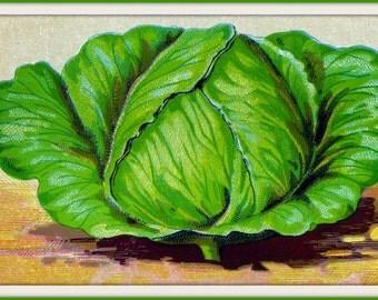 Kitchen Art Cabbage Victorian 1820s - Print