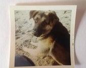 Vintage Kodak Color Photo Dog Beach Sand