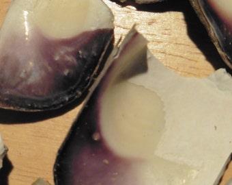 Wampum quahog shells for crafting/jewelry, free shipping