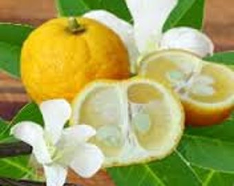Yuzu (Japanese Grapefruit) Premium Fragrance Oil Uses: Diffuse For Air Freshener/Aroma Therapy/Bath-Beauty Products /Soap/Candles/Much More