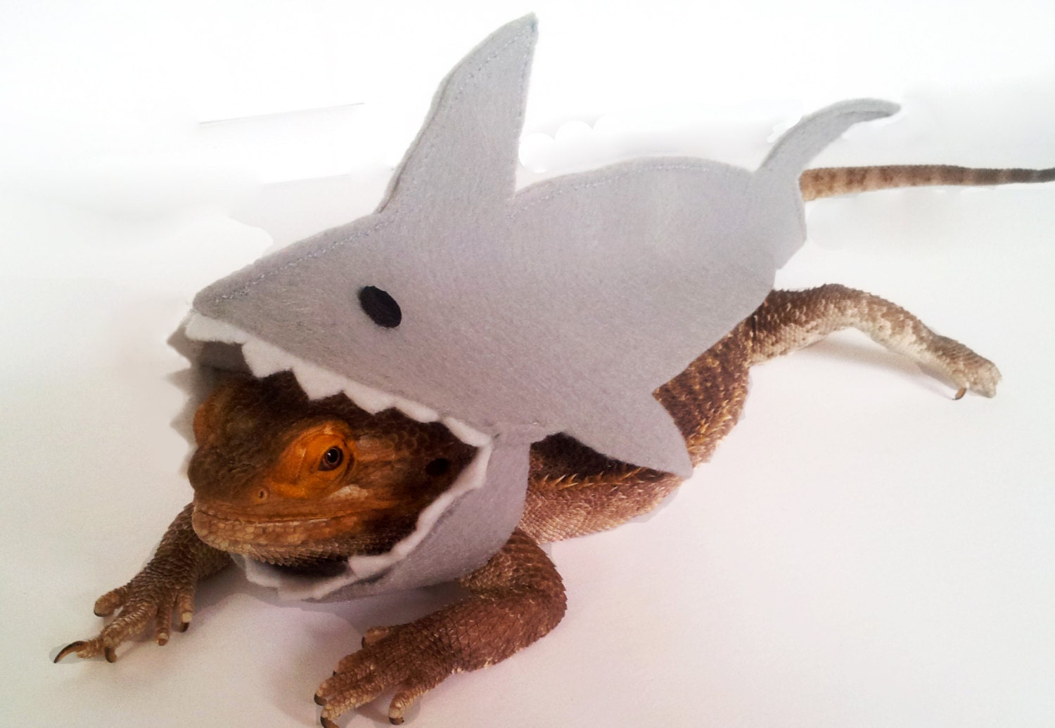 bearded dragon clothing shark two colours by getstuft on etsy