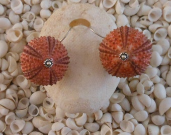 Unbreakable, seaurchin earrings. Real sea treasure...