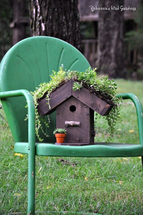 Diy Living Roof Birdhouse Succulent Birdhouse Green Roof
