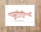 Striped Bass Striper Art in Red- Fishing Poster Bass Print Beach Decor Nautical Decor Ocean Wall Decor Gifts For Dad Fishing Art Fathers Day