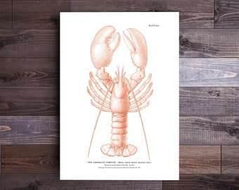 Lobster Art in Orange - Maine Print Lobster Print Beach Nautical Decor Ocean Art Beach Art Nautical Print Lobster Art Valentine's Day Gift