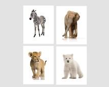 nursery prints - art wall prints - Real animal -  Zebra print - Elephant print - Lion - Polar Bear - Baby animal prints