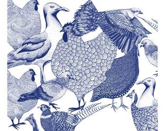 Bird Clan A3 Print