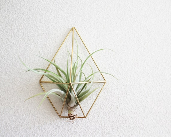 Wall Sconce Plant Holder : The Sand Dollar Wall Sconce Brass Air Plant Holder Modern