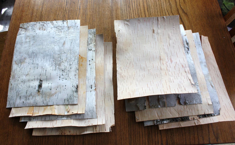 10 feuilles d 39 corce de bouleau grand feuilles de tout - Feuille de bouleau photo ...