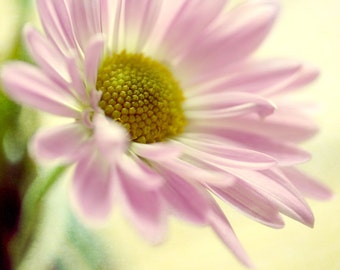 Pink yellow wall art, flower photography, Daisy picture, floral art print, baby girl room decor nursery wall art print, bedroom decor, amber