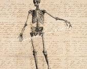 Vintage Art Skeleton Diagram Wall Artwork Print Antique Artwork with Aged Script Paper Style Background No.2119 B9 8x8 8x10 11x14