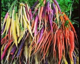 Carrot - Rainbow Mix (100% Heirloom/Non-Hybrid/Non-GMO)