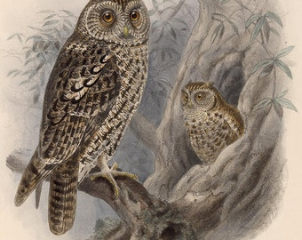 Two owls sitting in a tree image download, birds art, owl picture, nature painting, bird instant download