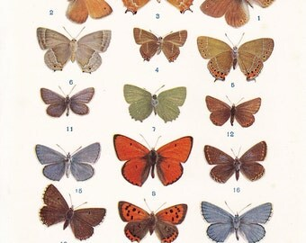 Vintage Butterfly Print Lepidopterology British 5.25 x 8.25 inches